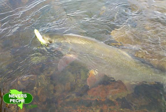 Sur quoi le brochet dans la pêche réelle béquète