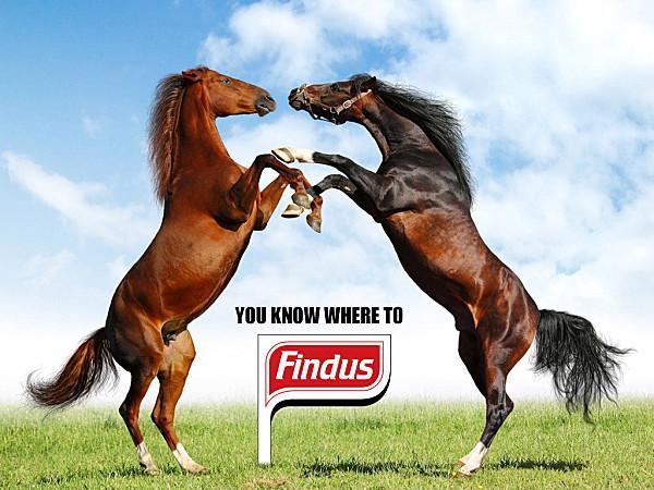 findus trouvé cheval