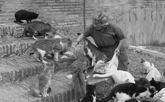 rome-et-les-gattare
