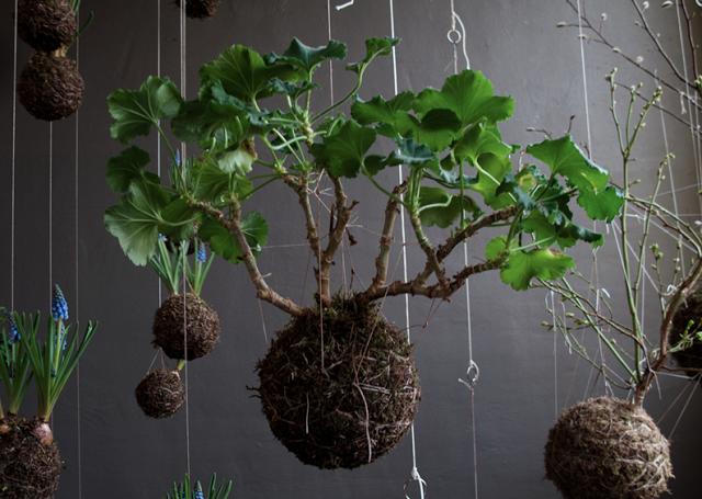 La poésie dun jardin suspendu - Paperblog