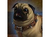 Découvrez Woof: L'addon chien