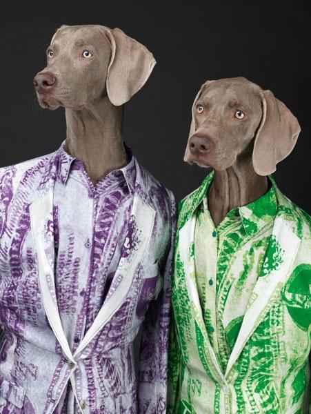 insolite la campagne acne avec des chiens   paperblog