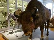 Museum Histoire Naturelle d'Ethnologie Rochelle