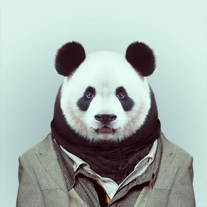 Zooportraits, Yago Partal