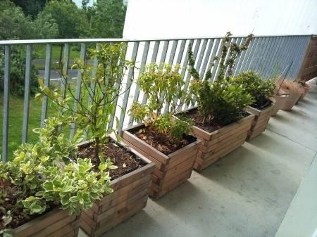 Bulbes de printemps que planter sur son balcon paperblog for Quelles plantes pour balcon