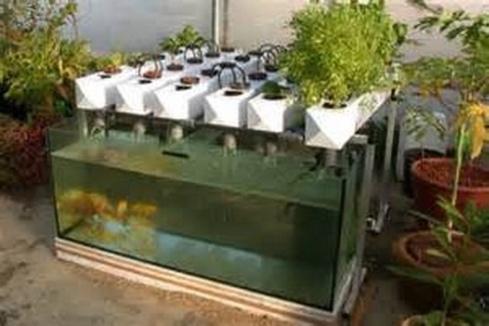 des poissons font pousser des l gumes paperblog. Black Bedroom Furniture Sets. Home Design Ideas