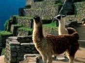 idées d'activités originales autour Cusco