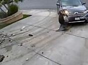 L'accélérateur coincé d'une Toyota Highlander collision frontale videos