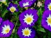 belle jour semis charmera votre jardin