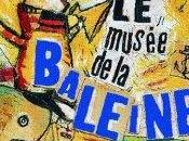 musée baleine, Aurélia Grandin