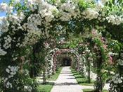 création d'un jardin roses anciennes