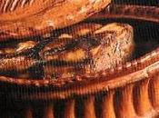 Terrine foies volaille