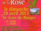 Sant Jordi Fête Livre Rose, Saint Jean Buèges, Avril, véritable réussite.