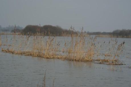 Promenade autour du Lac de Grand lieu