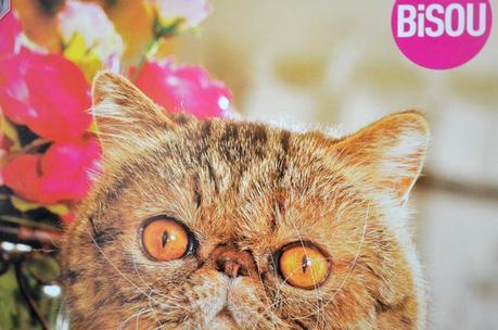 bisou-poster-chat.jpg