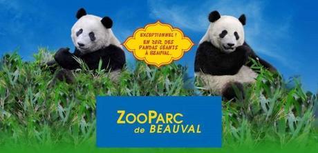 pandas zooparc beauval 600x290 Le prestigieux ZooParc de Beauval