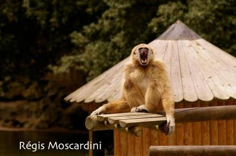 zoo palmyre8 585x389 [La Boite à Photos] Comment réussir un portrait dans un parc animalier