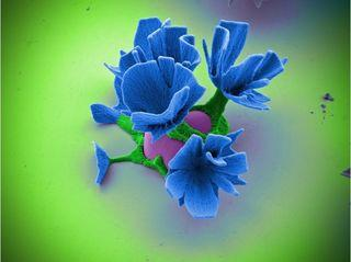 Fleurs2 image Wim Noorduin via scienceset avenir