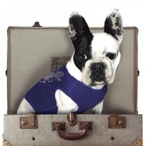 tee-shirt chien