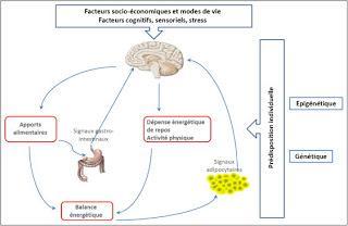 Contrôle nutritionnel de l'appétit par les neurones gastrointestinaux extrinsèques