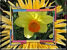 plantes-et-fleurs-du-06.04.2011 00136 modifié-2