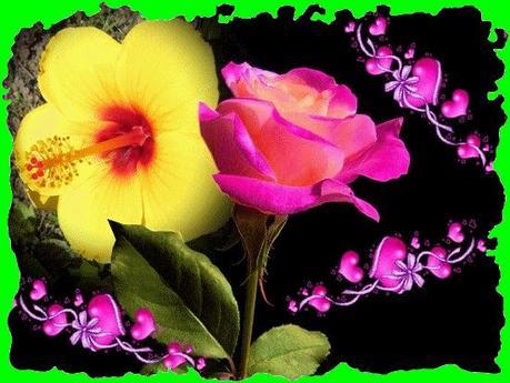 ibiscus jaune
