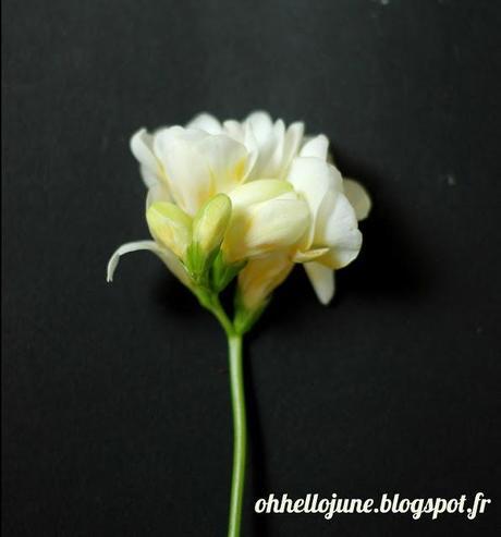Inspiration herbier et botanique