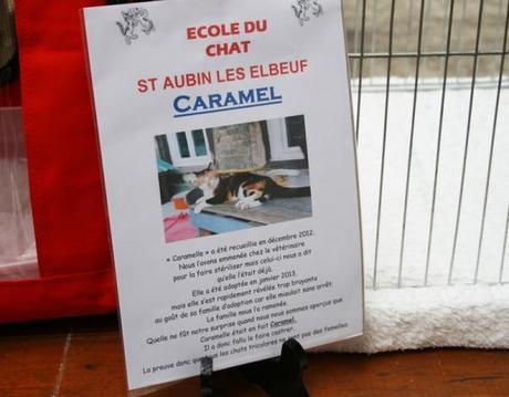 L'incroyable histoire du chat appelé Caramel - Exposition féline Salon du Chat
