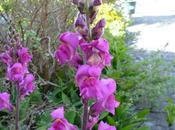 couleur dans jardin