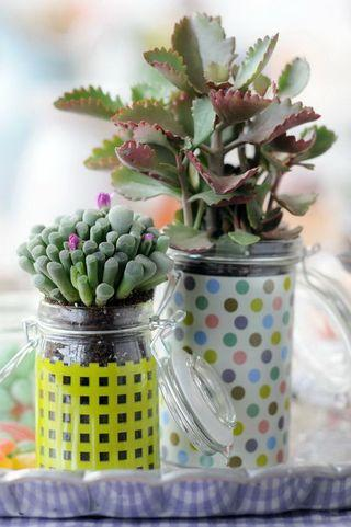 Les succulentes ou plantes grasses paperblog - Plantes grasses succulentes ...