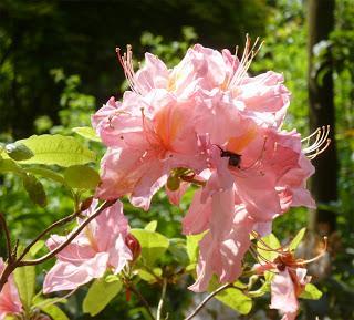 La feuillerie paradis des plantes fleurs arbres et for Arbres plantes fleurs