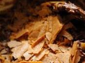 vendredi c'est retour vers futur…Crunchy fingers chocolat Nutella dentelle