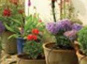 système d'arrosage automatique pour plantes votre balcon