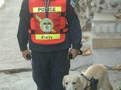 Thaïlande: attention chien armé