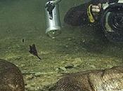 Nager avec Anacondas Franco Banfi
