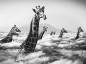 Thomas Subtil photographie drôle animaux Kenya