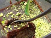 douceur jour, fondant amande cardamome ganache chocolat