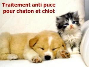 Quel traitement anti puce pour chaton et chiot lire for Anti puce pour la maison