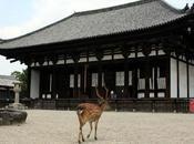 Nara, ville temples chevreuils