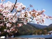 bambouseraie d'Arashiyama