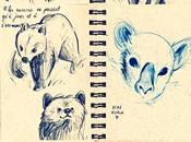 Cute cute bears koalas
