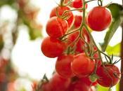 Sélection Chef rendez-vous jardin pommes d'or…