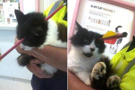 Un chat reçoit une flèche en pleine tête (Nouvelle-Zélande)