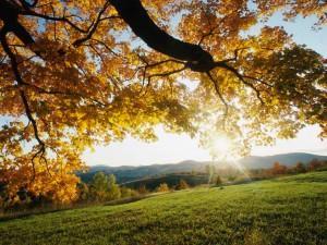 Feuilles d?érable en automne.