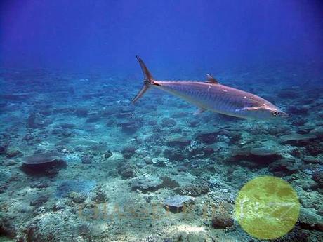 image vie sous marine