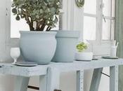 Inspiration plante crassula pour l'abondance avant fêtes