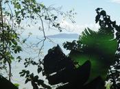Voyage vous emmène découverte faune flore Guyane
