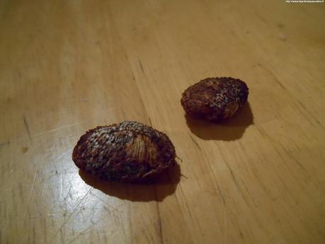 Semer des graines de mangoustan paperblog - Comment semer du persil ...