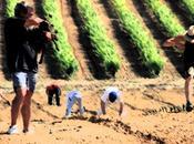 Millesime Bio, Colombette annonce traitements chimiques pour vigne
