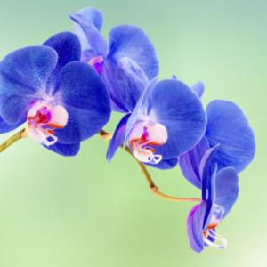 L orchid e symbole de bien tre paperblog - Comment garder une orchidee ...